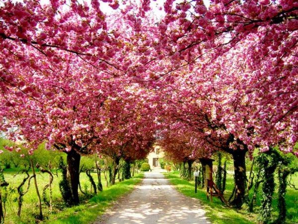 bahar.jpg